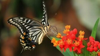 HD Wallpaper Butterfly hd wallpapers