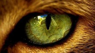 Download Wallpaper Big macro eye from a wild animal   HD wallpaper