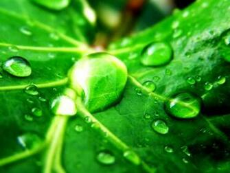Green Nature Wallpaper   Green Wallpaper 19511380