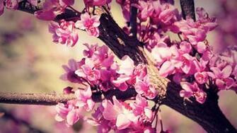 Cute Flower Wallpaper Tumblrjpg