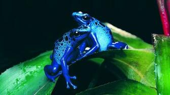 Wallpapers Full HD Wallpapers 1080p 5802 animals hd wallpapers frogs