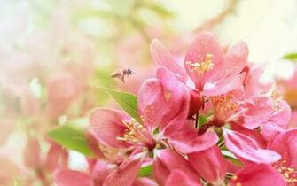 Flower Desktop Wallpapers