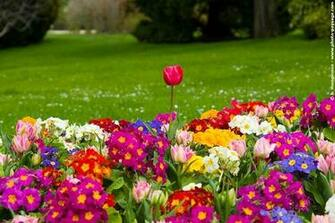 Some of the flowers included in this spring flower wallpaper