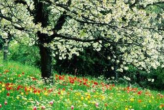 Spring HD Wallpapers Widescreen   Wallpapers