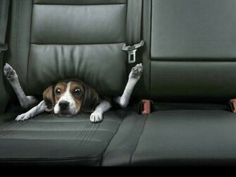All Wallpapers Funny Dogs Wallpapers