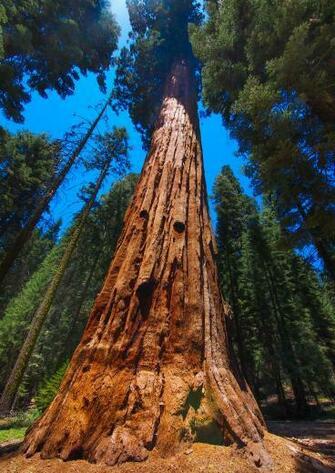 Best 54 Sequoia National Park Wallpaper on HipWallpaper