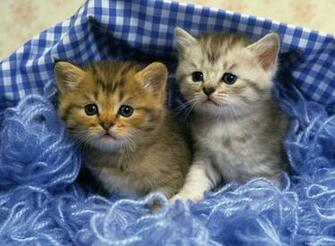 Cute Kittens Desktop Hd Walpapers Gallery Cute Kittens Desktop Hd