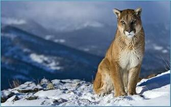 Screensaver mac os mountain lion   Download
