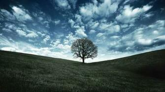 Oak Tree Crow Landscape Wallpaper High Quality WallpapersWallpaper