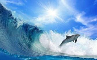 wallpaper of a dolphin and a big wave HD animals wallpapers