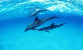Cute Dolphin Wallpaper 10207 Hd Wallpapers in Cute   Imagesci