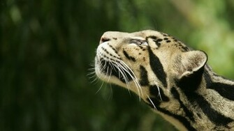 WildLife   wildlife Wallpaper 21003845