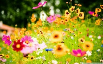 Summer flowers wallpaper and make this Summer flowers wallpaper for