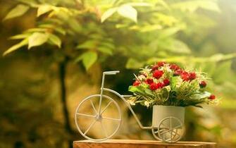 Flowers Full Hd Wallpapers