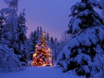 Snowy Christmas tree   wallpaper backgrounds   desktop wallpapers