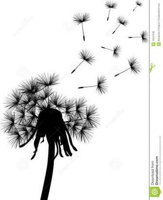 Dandelion Black And White Wallpaper Black dandelion plant
