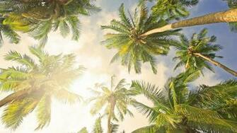 Bright Palm Tree HD Backgrounds   Desktop Wallpapers