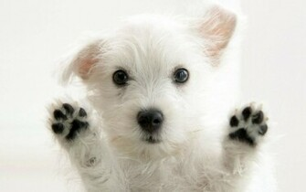 HD 3D Wallpapers Cute Puppy Paws Dog HD Wallpapers