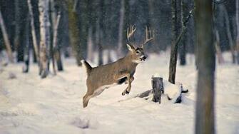 Wallpaper snow wood winter deer horn desktop wallpaper Animals
