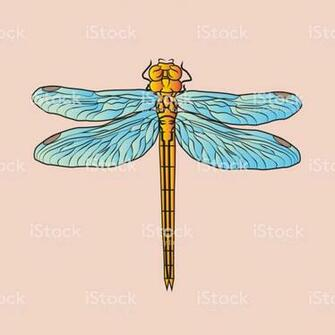 Dragonfly On Pink Background Beautiful Postcard Illustration Or