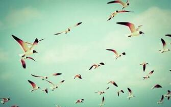 Birds Flying wallpaper high resolution Nature Birds wallpaper