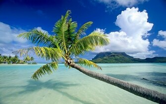 Bora Bora Palm and Clouds Wallpaper   Travel HD Wallpapers