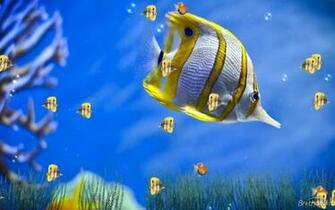 similar design fish live wallpaper fish live wallpapers dowload fish