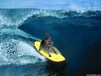 free wallpaper pc computer wallpaper download surfing kitten