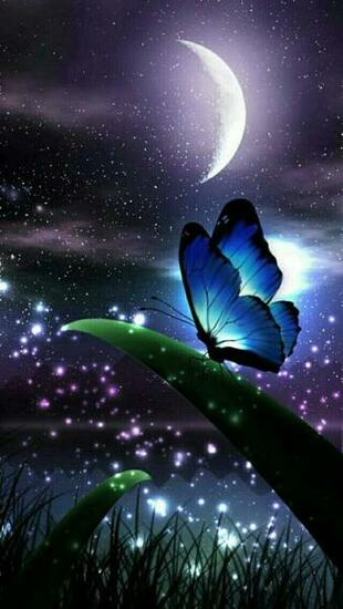 Butterfly Night BUTTERFLY in 2018 Pinterest Butterfly