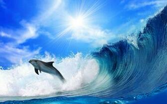 Cute Dolphins HD Wallpapers CollectionImage to Wallpaper