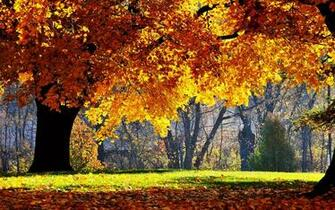 Beautiful Fall Scenery Wallpapers Images amp Pictures   Becuo
