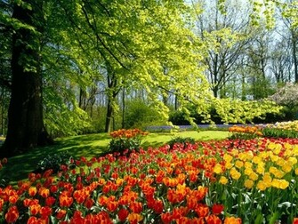 Wallpapers of Flowers Wallpapers Flowers Nature