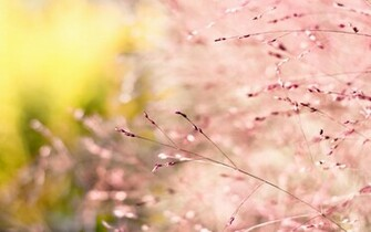 Pink nature wallpaper desktop Wallpapers