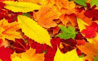 Red Autumn Leaves Wallpapers hd