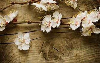 spring flowers wallpaper widescreen   Wallpapers