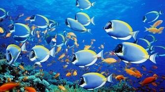 Unique Wallpaper Exotic Fish Wallpaper HD