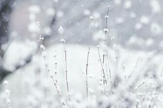 Winter Wallpaper 6795137