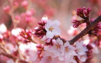 Spring HD Wallpapers Backgrounds download at