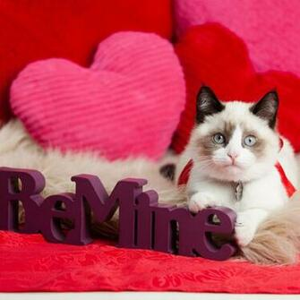 Be Mine   Valentines Day Wallpapers HD Wallpapers