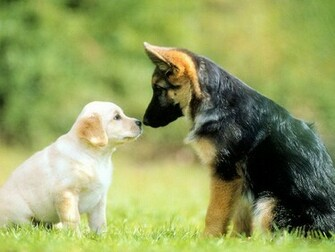 cute dogs care and affection amongst dogs love contrast cute dogs dogs
