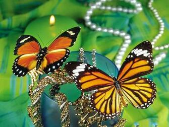 Monarch Butterflies   Desktop Wallpapers