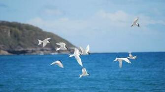 Flying birds Wallpaper 40396