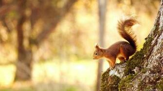 Squirrel Wallpapers HD Pictures One HD Wallpaper