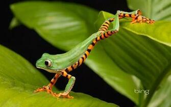 Bing theme frog jumping widescreen HD wallpaper   1680x1050