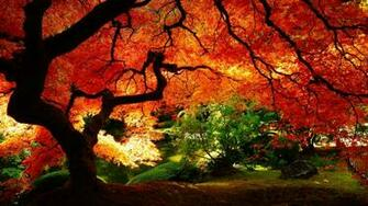 78] Desktop Backgrounds For Fall on WallpaperSafari