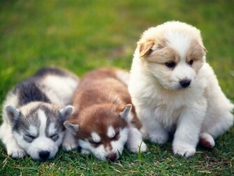 Cute Puppies Wallpapers 9745 Hd Wallpapers in Animals   Imagescicom