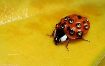 Weird Ladybug wallpaper   806103