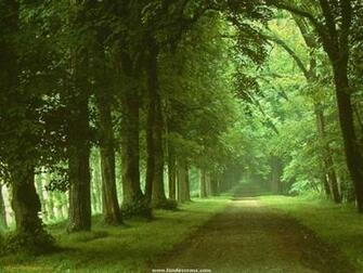 Green Road Nature Wallpaper   Nature Wallpaper