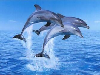 Dolphins Wallpaper Dolphins Wallpapers Dolphins Wallpapers for