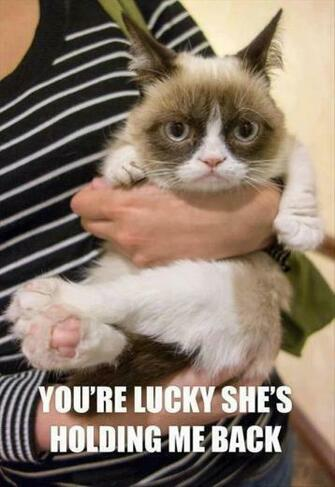 funny grumpy cat pictures   Dump A Day